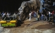 Jurassic Park - zdjęcia z planu  - Zdjęcie nr 3