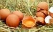 Jajeczna