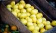 Do wielu potraw dodaje się sok z cytryny, który nadaje im wyśmienity smak i aromat