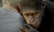 Geneza Planety Małp  - Zdjęcie nr 3