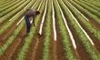 9. Rolnik indywidualny na �rednim gospodarstwie