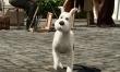 Przygody Tintina  - Zdjęcie nr 3