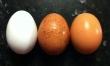 Jajka gotowane w moczu