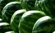 Właściwości arbuza nawadniające organizm