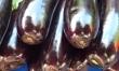 Osoby stosujące antybiotki powinny spożywać bakłażana ze względu na jego wlaściwości oczyszczające
