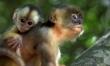 Amazonia 3D. Przygody małpki Sai  - Zdjęcie nr 2