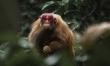Amazonia 3D. Przygody małpki Sai  - Zdjęcie nr 4