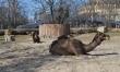 Zwierzęta we wrocławskim ZOO  - Zdjęcie nr 1