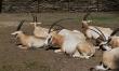 Zwierzęta we wrocławskim ZOO  - Zdjęcie nr 4
