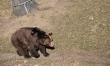 Zwierzęta we wrocławskim ZOO  - Zdjęcie nr 3