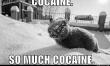 Memy ze śmiesznymi kotami  - Zdjęcie nr 2