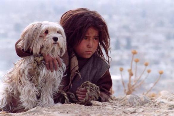 DKF: Bezpańskie psy
