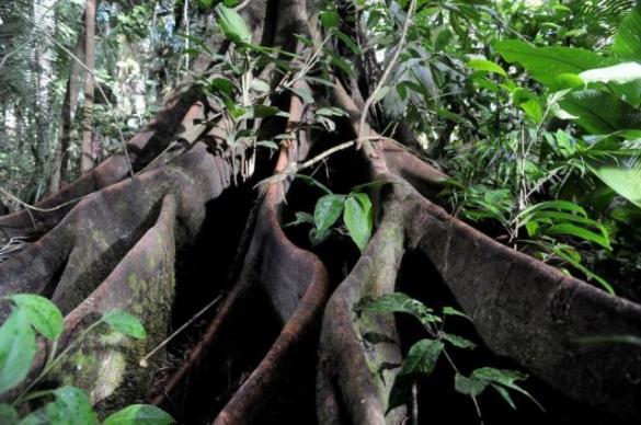 Filmowy Klub Seniorów: Był sobie las