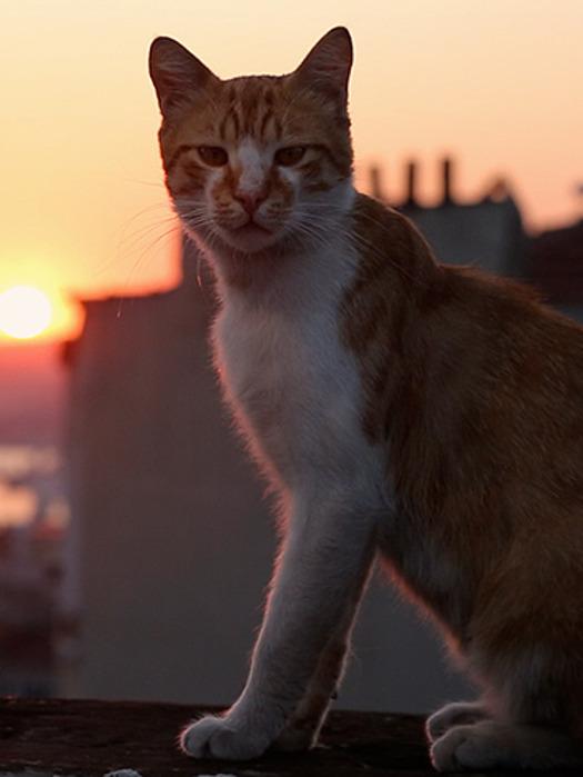 Kedi - sekretne życie kotów - pokazy przedpremierowe