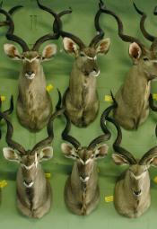 Akademia Dokumentalna: Safari