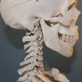 Bioimplanty odbuduj� ludzkie ko�ci [WIDEO] - bioimplanty, implant, ko�ci, zdrowie