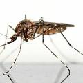 Oto skuteczne sposoby na komary! - sposoby na komary, ugryzienie komara,