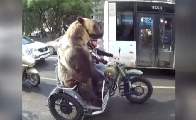 Niedźwiedź na motorze