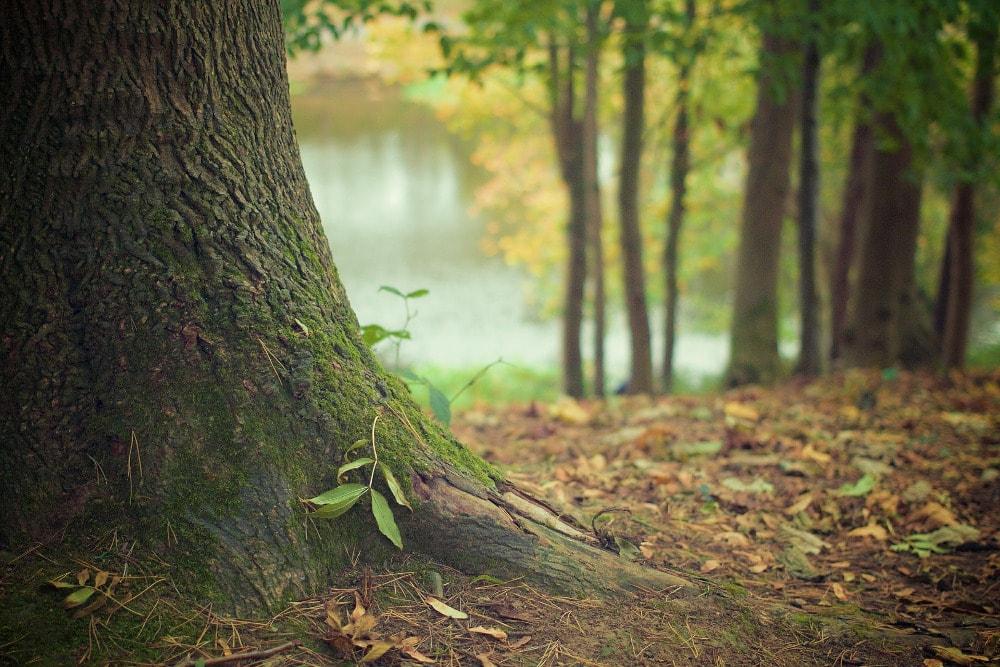 Amerykańscy naukowcy odkryli las po wodą