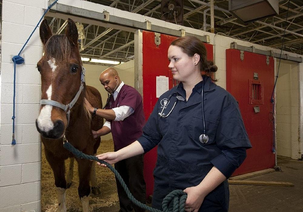 Po tych studiach będziesz mógł wykonywać zawód związany z opieką, hodowlą lub leczeniem zwierząt.