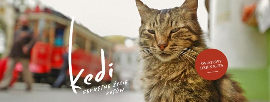 Międzynarodowy Dzień Kota - Kedi