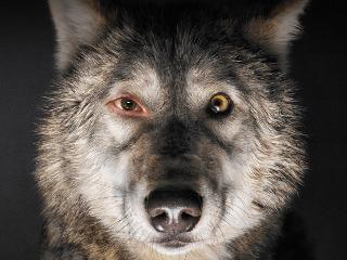 """""""Pokot"""" Agnieszki Holland wygrywa Srebrnego Niedźwiedzia na Berlinale! - berlinale 2017, agnieszka holland, pokot film, pokot 2017"""