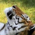 Walentynkowa...adopcja zwierzak�w - adopcja zwierz�t, martyna wojciechowska, doroci�ski, wwf