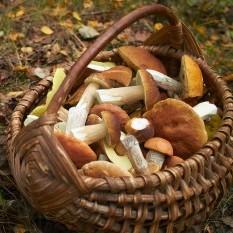 Dary lasu – smakowite grzyby w polskiej kuchni - grzyby, las, zupa, sos, aromat
