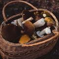 Proste i pyszne przepisy z grzyb�w le�nych - proste przepisy z grzyb�w, grzyby le�ne przepisy, pomys� na grzyby