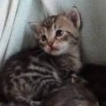 Mamy kotki - Mamy-Kotki! [WIDEO] - mamy kotki, mamy kocice, s�odkie kotki, wideo