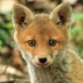 HIT! Dzikie zwierz�ta, kt�re zachowuj� si� jak maluszki - dzikie zwierz�ta jak maluszki, dziobak, krowa, s�odki pancernik
