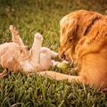 Te rasy psów są najinteligentniejsze! - najinteligentniejszy pies, najinteligentniejsze rasy psów