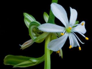 Te rośliny wyprodukują najwięcej tlenu i zwalczą szkodliwe substancje! - jakie rośliny do mieszkania, rośliny doniczkowe produkcja tlenu, jak zwalczyć zanieczyszczenie