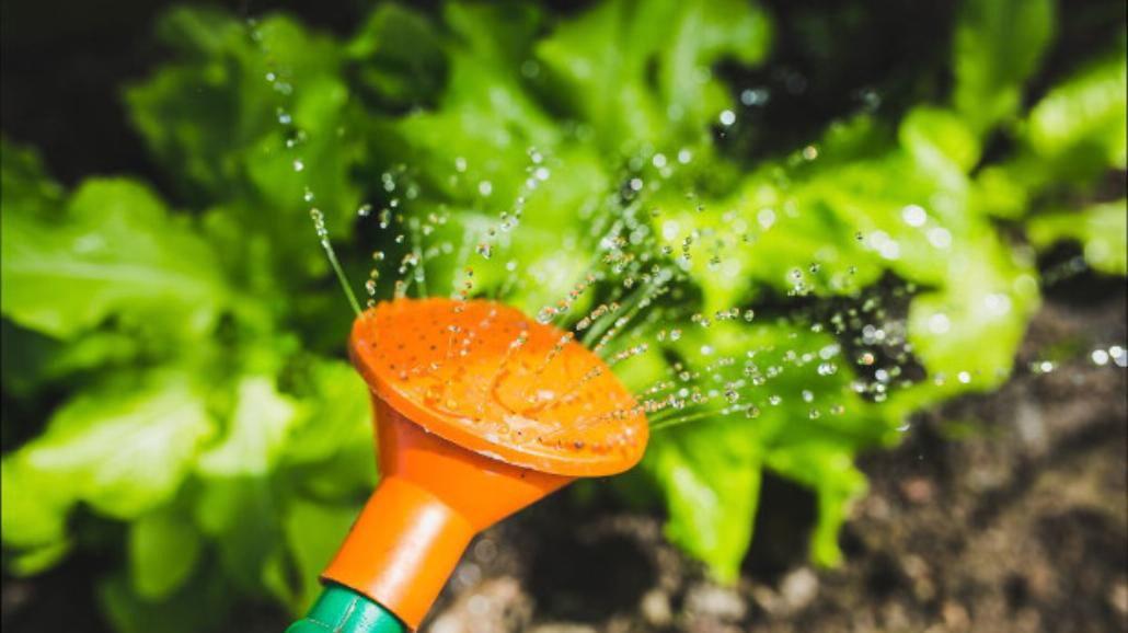 Ogrodnictwo, dobry sposób na odpoczynek