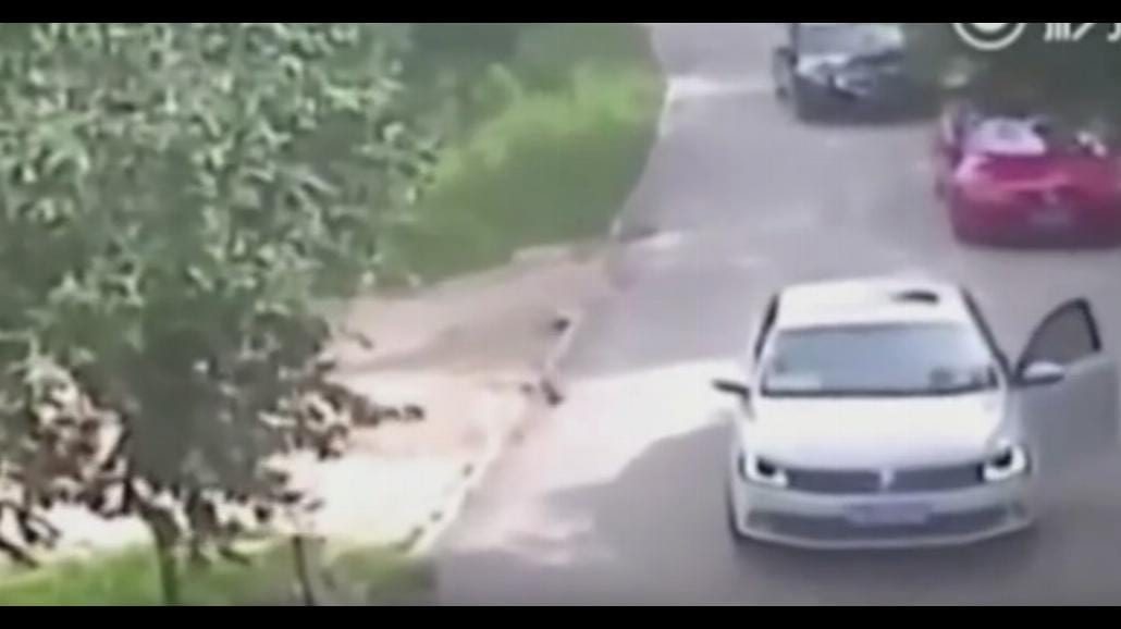 Tygrys zaatakował w chińskim zoo. Uwaga! Drastyczne nagranie [WIDEO]