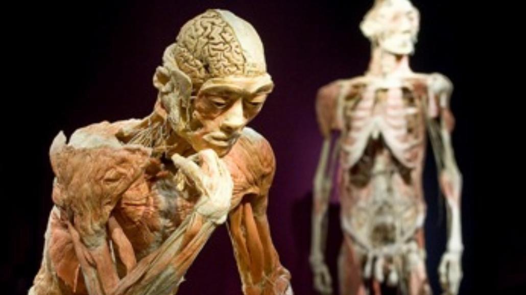 Wystawa The Human Body dotarła do Polski