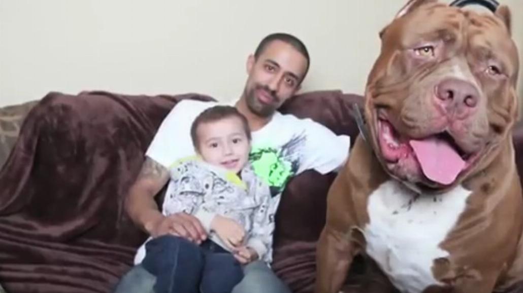 Poznajcie Hulk'a - największego psa na świecie! [WIDEO]