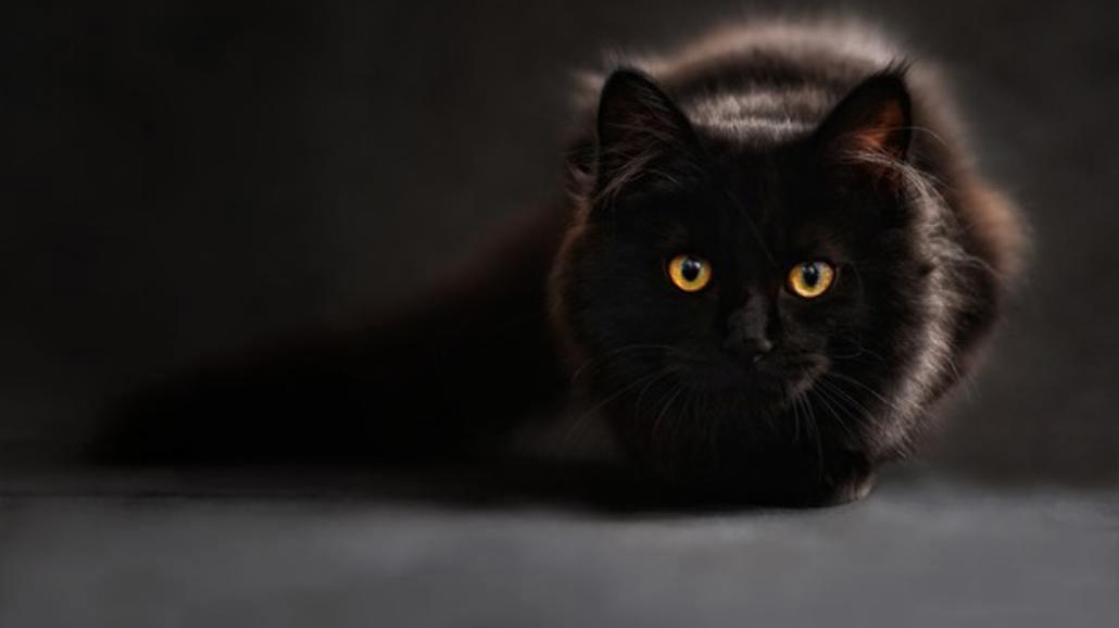 Piatek 13-go, czarny kot...Te przesądy wzbudzą strach!