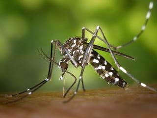 Chcesz odstraszyć komary? Oto sposoby! - sposoby na komary, spray ochronny na owady, ocet na komary, środki na komary