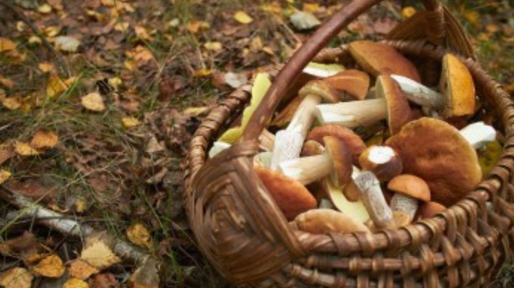 Dary lasu – smakowite grzyby w polskiej kuchni