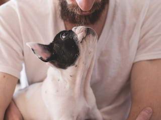 Pięć zawodów dla miłośników zwierząt - praca w schronisku, groomer, behawiorysta, psi psycholog, hobby, praca ze zwierzętami