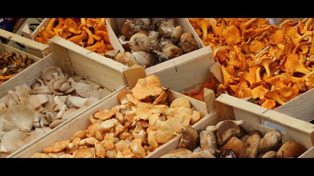 Czy znasz 5 magicznych ciekawostek o grzybach?