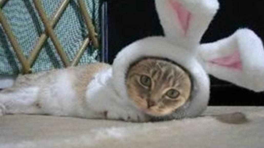 Co się dzieje z właścicielami kotów na Wielkanoc?