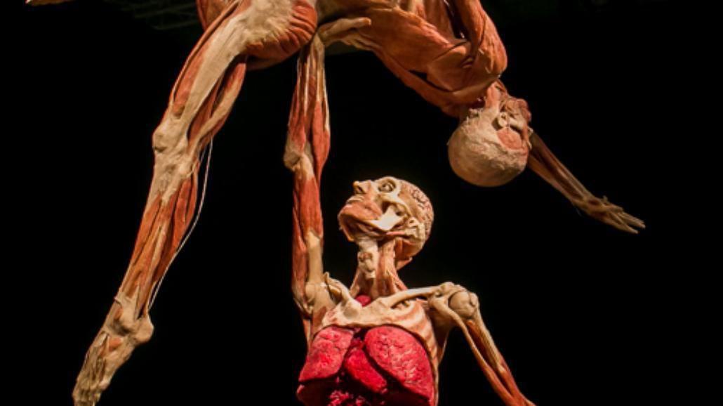 Cząstka duszy w plastynacie - kontrowersyjna wystawa Body Worlds we Wrocławiu