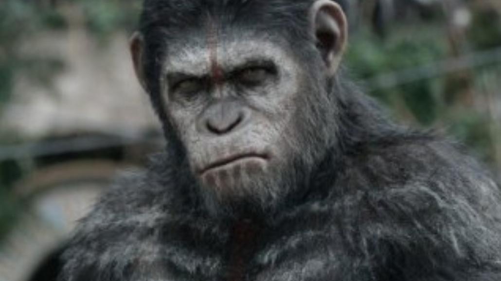 Małpy opanowały Box Office