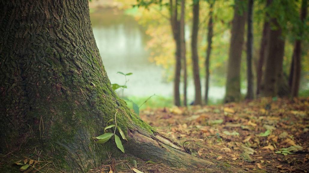 W Alabamie odkryto las pod wodÄ…
