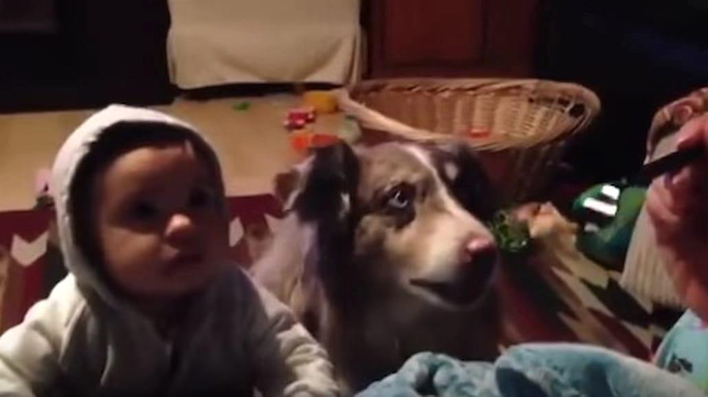 Mama uczy mówić dziecko i...psa! Wygrywa pies! Ten filmik bije rekordy popularności! [WIDEO]