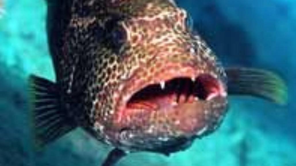 Ryba do powieszenia