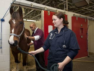 Kierunki studiów dla miłośników zwierząt - Leczenie zwierząt, hodowla, szkolenie, psychologia, weterynaria, studia związane ze zwierzętami