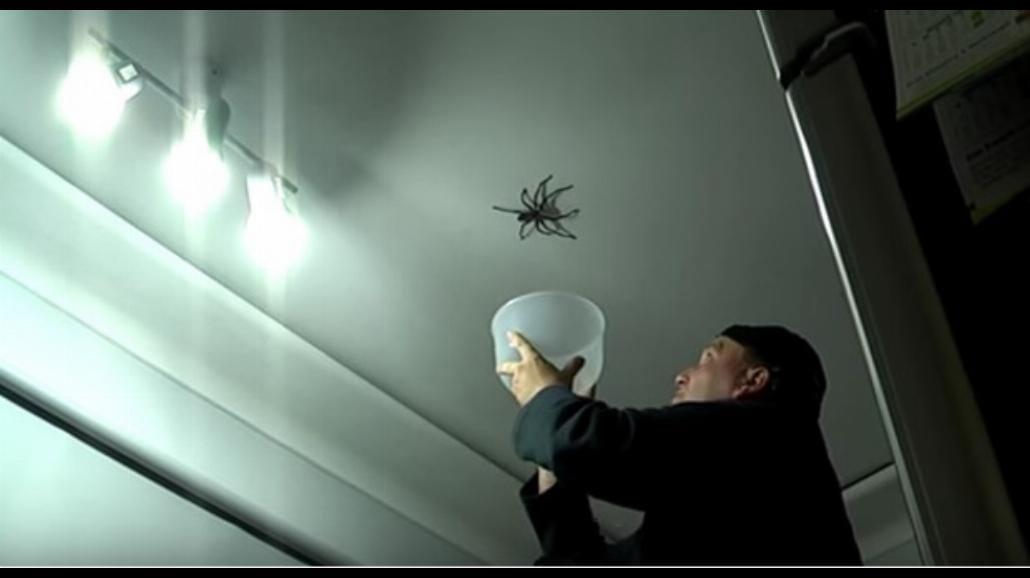 Boisz się pająków? Filmik dla ludzi o mocnych nerwach [WIDEO]